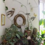 モンステラ ウォールデコレーション つる性植物