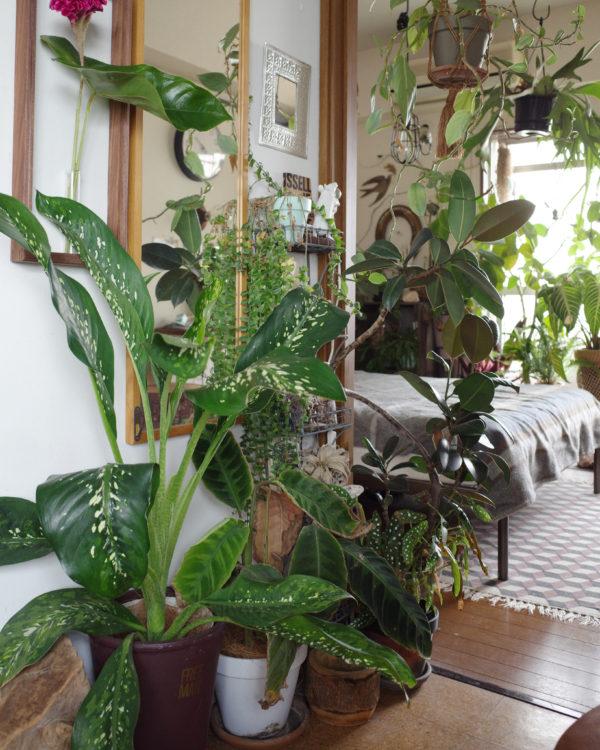 植物 鏡 映り込み
