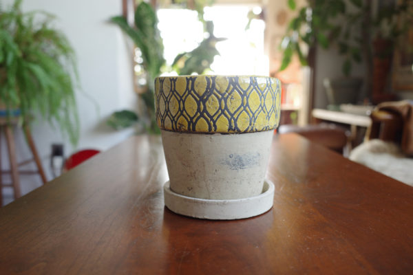 ダルトン 鉢