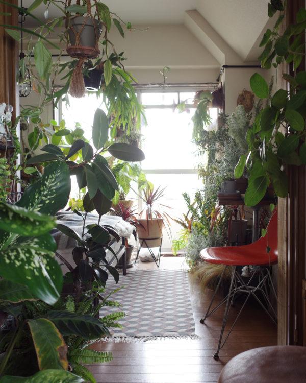 グリーン ジャングル 植物 インテリア